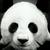淘气大熊猫