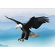 鸟瞰世界的雄鹰