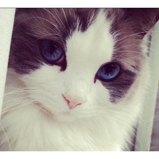 snow_cat-meow