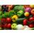 蔬菜瓜果种植技术