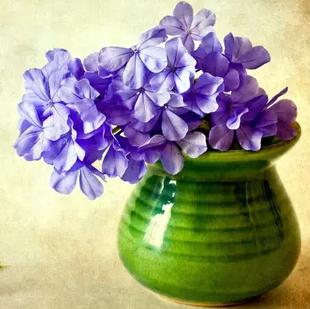 陈小鱼Iris