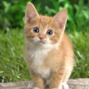 小cat喵