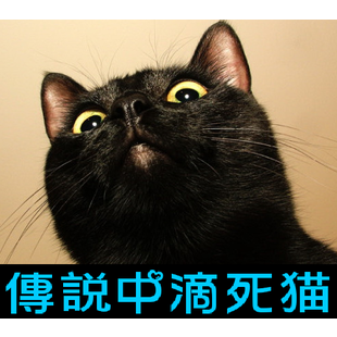 传说中Di死猫