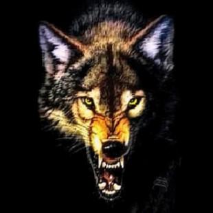 红星56狼