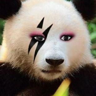 优酷-熊猫