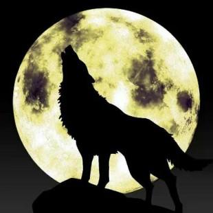 爱殿哥的孤狼月