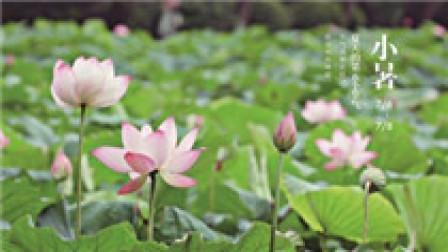 二十四节气大型纪录片《四季中国》第十一集:小暑