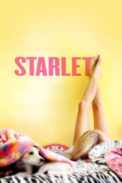 待綻薔薇 Starlet