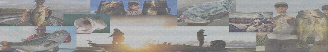 Basshow banner