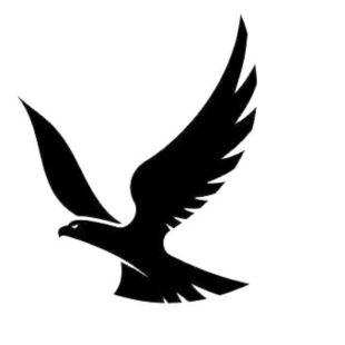 自由vvv飞翔