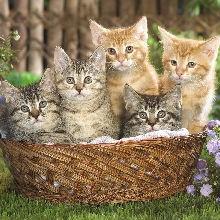 kittyliujy小猫