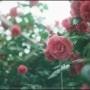 Flightless-SoRun26919917