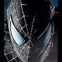 Spider_蜘蛛80
