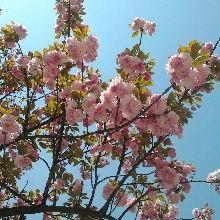 栗子树下西瓜甜的主页_土豆视频