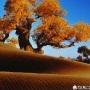 沙漠之星131116
