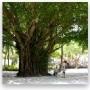 大树A1EB5
