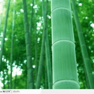 竹子lzhu