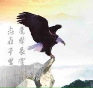 小老鹰abc