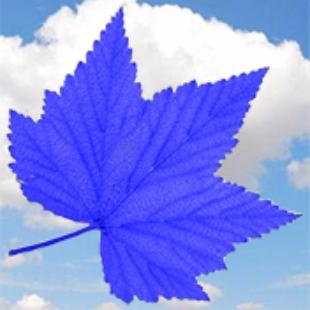 霸气的蓝叶子