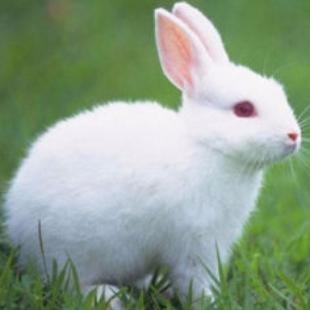 兔斯lin