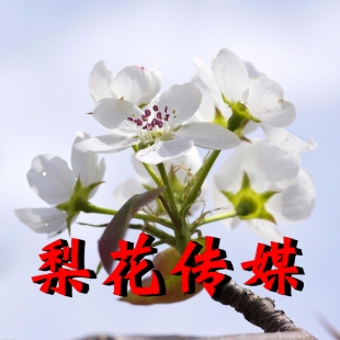 梨花晋剧文化传播吕超俊