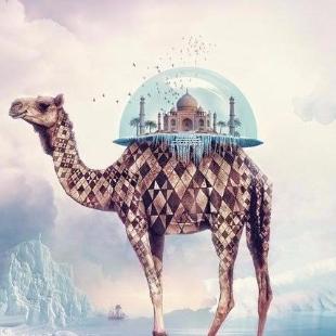 骆驼2233