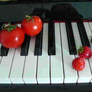新野钢琴教室