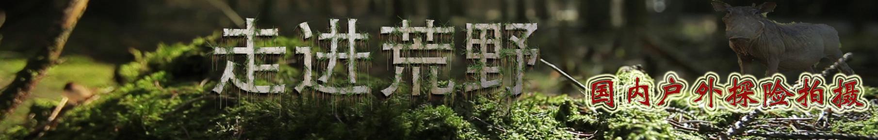 温热山丘 banner