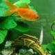 孤鱼-Fish