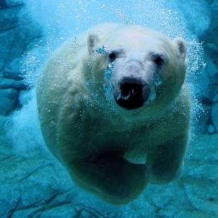 PolarbearGy