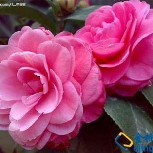 花在春天72128329