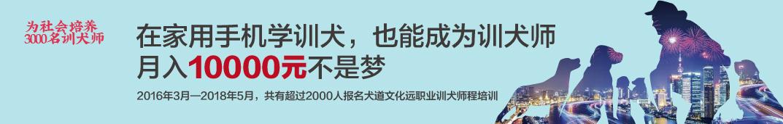 犬道文化公开课 banner