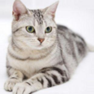 女汉子猫咪