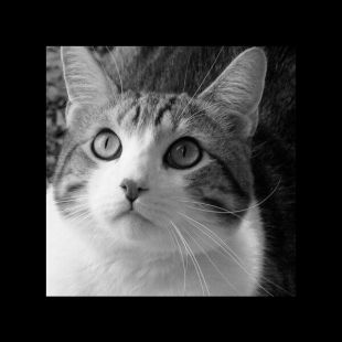 猫神绝地王