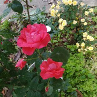 春风拂动花儿朵朵