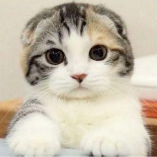 猫猫家的小鱼干儿呢