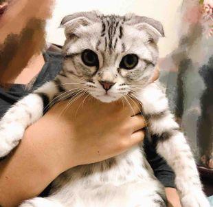 猫小咪1HelloKitty