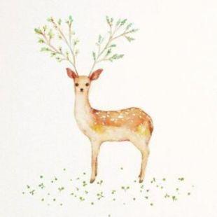 迷鹿寻途-MOON
