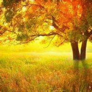 这是一棵树