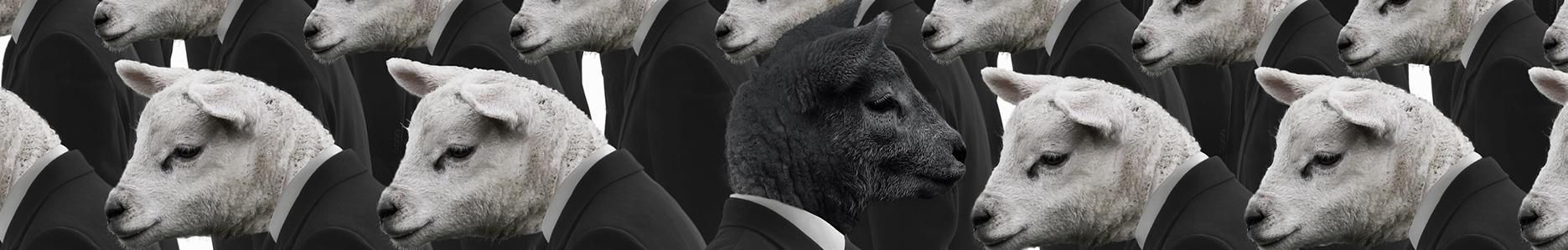 黑羊时代 banner