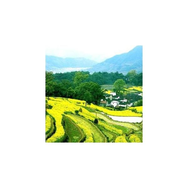 中国最美乡村展播