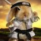 坏坏流氓兔