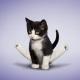 看世界的小猫