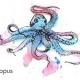 章鱼OCTOPUS666