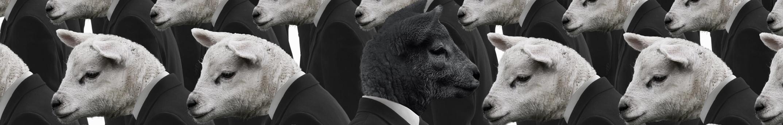 黑羊出品 banner