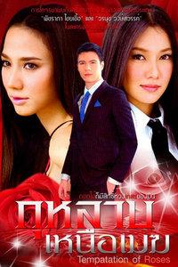 云上的玫瑰(2009)