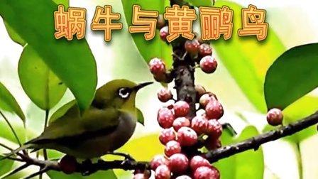 经典儿歌-蜗牛与黄鹂鸟