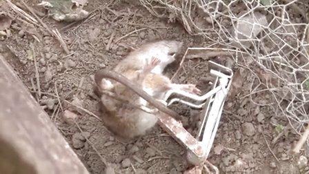 老鼠遇上气步枪之花园除害