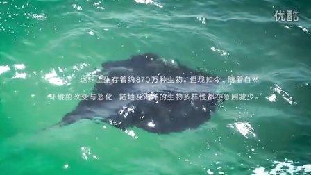 蝠鲼项目 ~为了保护海洋生物~