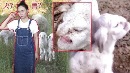吓尿了!母羊竟产下人脸羊宝宝【囧闻一箩筐】